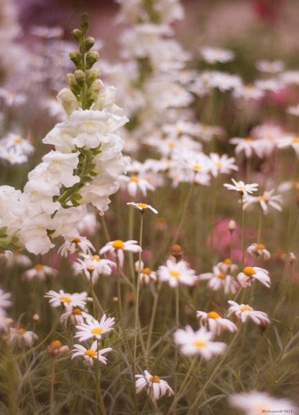Photograph - City Garden by Miguel Winterpacht