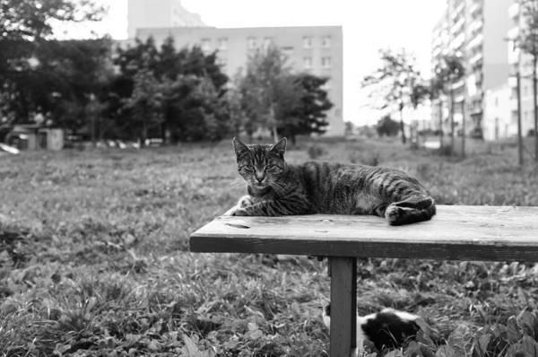 Photograph - City Lion by Tgchan