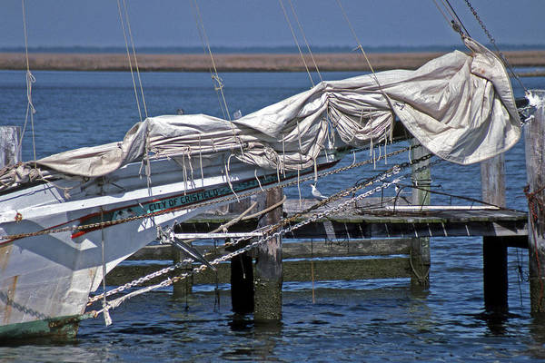 Skipjack Wall Art - Photograph - City Of Crisfield by Skip Willits