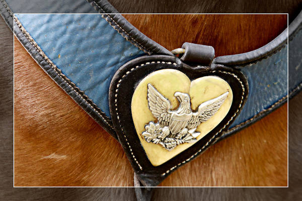 Photograph - Civil War Horse Breastplate by Alice Gipson