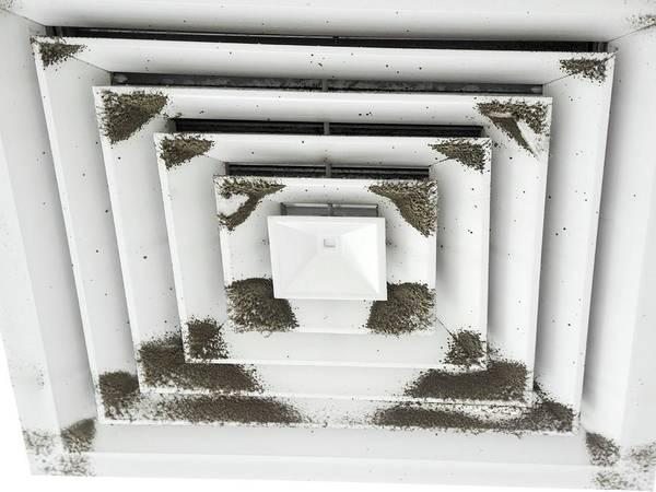 Vent Photograph - Cladosporium Cladosporioides Mold by Photostock-israel