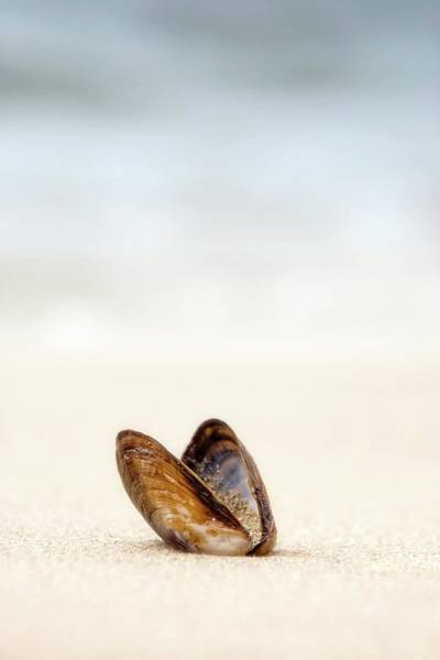 Wall Art - Photograph - Clam Shell by John Short