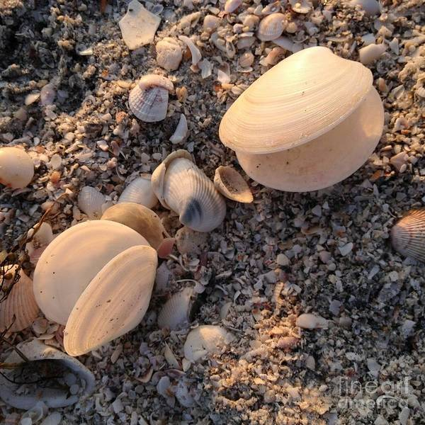 Photograph - Clam Shells by Chris Scroggins