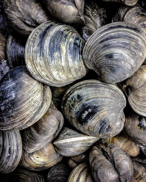Photograph - Clams Before The Chowder by Robert L Jackson
