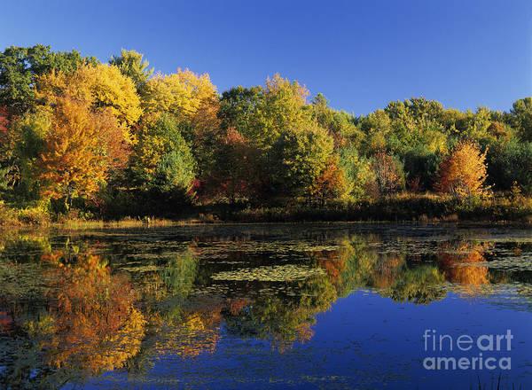Photograph - Clark Pond - Auburn New Hampshire  by Erin Paul Donovan