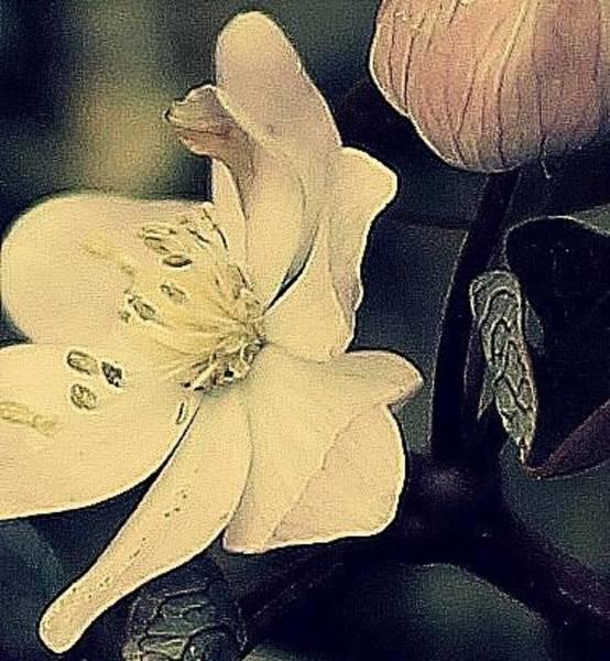 Photograph - Classic Beauty by Candice Trimble