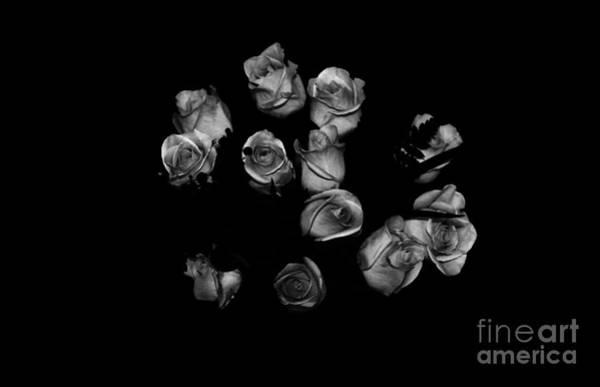 Photograph - Classic Black Roses by Oksana Semenchenko