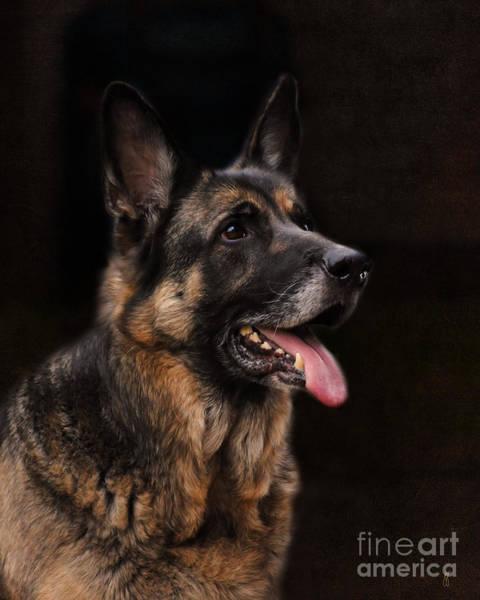 Classic German Shepherd Art Print