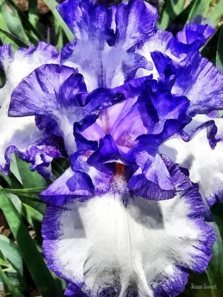 Photograph - Classic Look Iris Closeup by Susan Savad