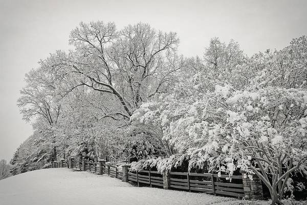 Photograph - Classic Snow by Carol Whaley Addassi