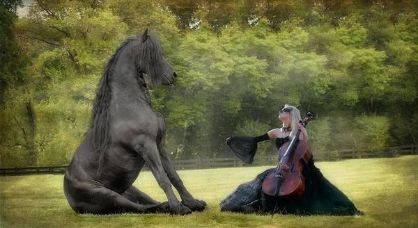 Friesian Horse Photograph - Classical Baroque by Fran J Scott