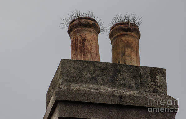 Photograph - Clay Chimney Growth by Dale Powell