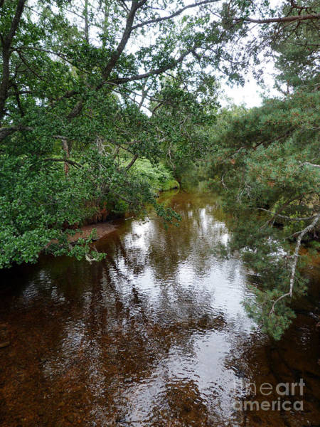 Photograph - Clear Water Stream - Cairngorms by Phil Banks