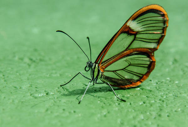 Photograph - Clear Wing by Tam Ryan
