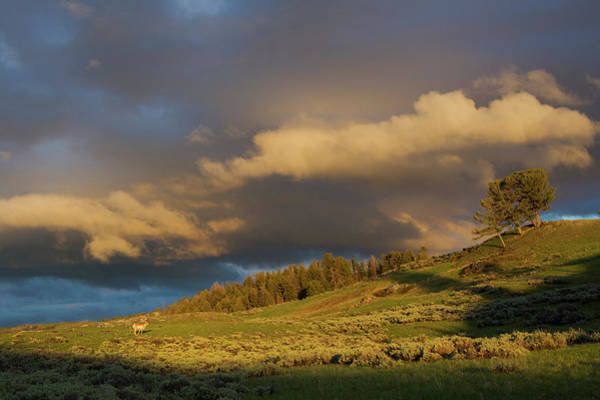 Pronghorn Antelope Wall Art - Photograph - Clearing Thunderstorm, Yellowstone by Ken Archer