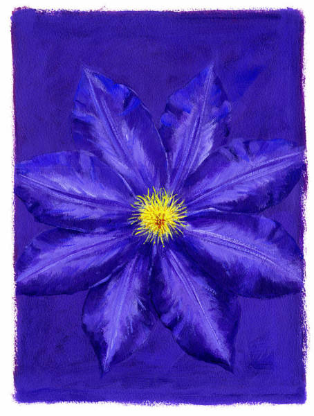 Clematis Wall Art - Photograph - Clematis by MGL Meiklejohn Graphics Licensing