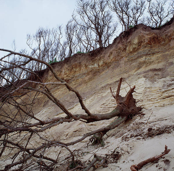 Eroded Wall Art - Photograph - Cliff Erosion by Robert Brook/science Photo Library