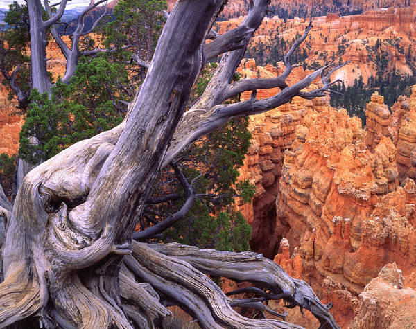Photograph - Cliff Hanger by Ray Mathis