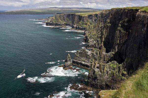 Moher Photograph - Cliffs Of Moher by Bob Gibbons