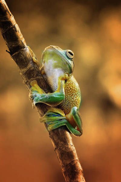 Frog Photograph - Climb by Ridha
