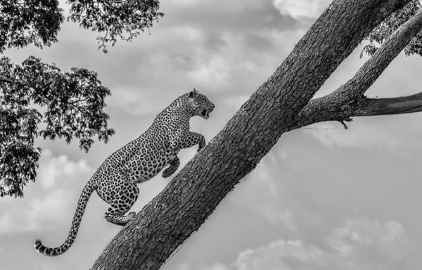Feline Photograph - Climb Up by Henry Zhao