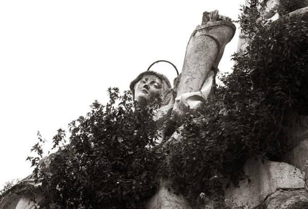 Photograph - Climbing From The Vines  by Lorraine Devon Wilke