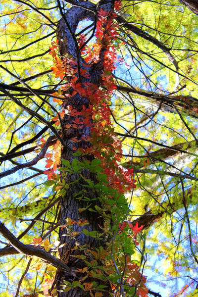 Lost River State Park Wall Art - Photograph - Climbing Red by Laurette Escobar
