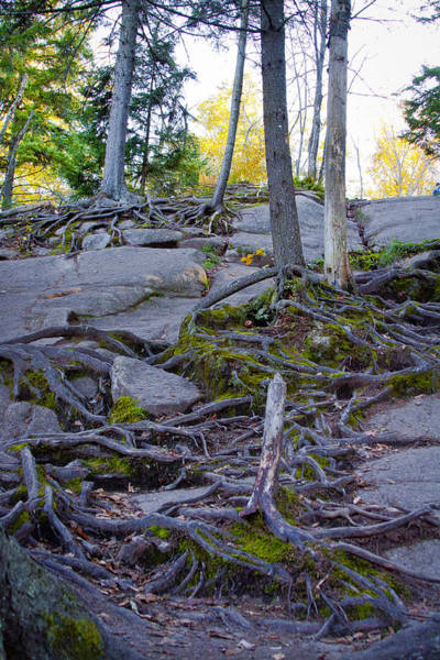 Photograph - Climbing The Rocks Of Bald Mountain by David Patterson