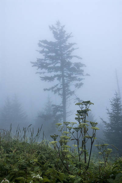 Photograph - Clingman's Fog II by Carol Erikson