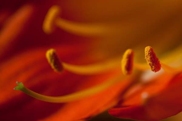 Clivia Wall Art - Photograph - Clivia Flower Close Up by Izzy Standbridge