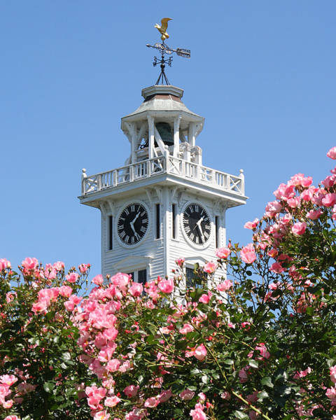 Photograph - Clock Tower And Roses by William Selander