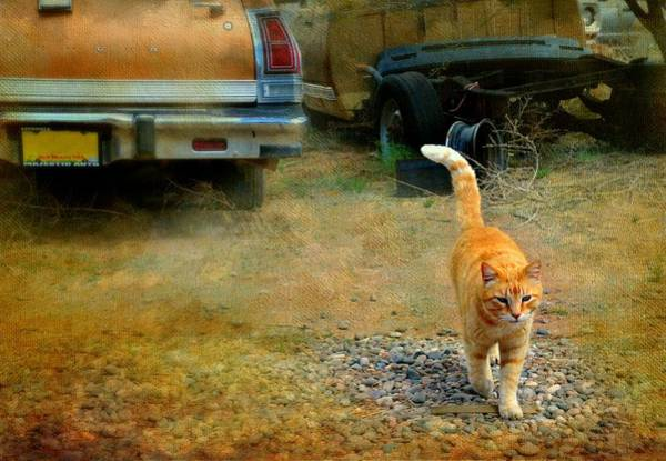 Orange Tabby Photograph - Clockwork Orange by Diana Angstadt