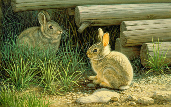 Bunny Rabbit Wall Art - Painting - Close To Cover by Paul Krapf