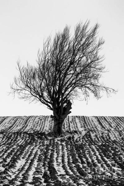 Wall Art - Photograph - Close Tree In Snow by John Farnan