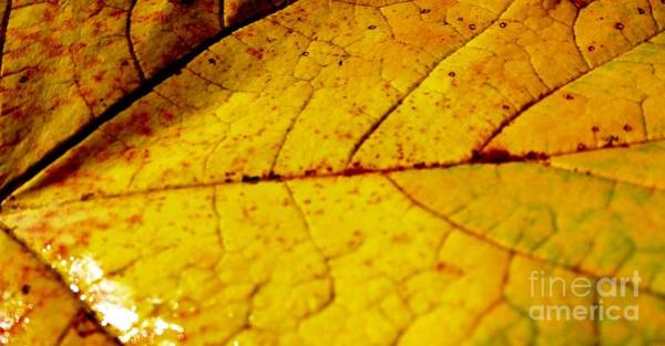 Photograph - Close-up Autumn Leaf by Cristina Stefan