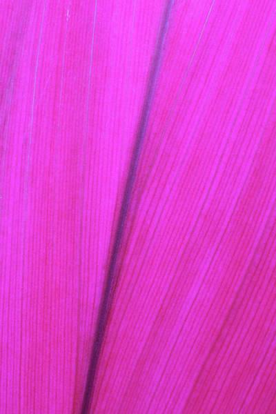 Wall Art - Photograph - Close Up Detail Of A Pink Flower Petal by Scott Mead