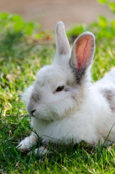 Photograph - Close Up Of A Bunny by Sotiris Filippou