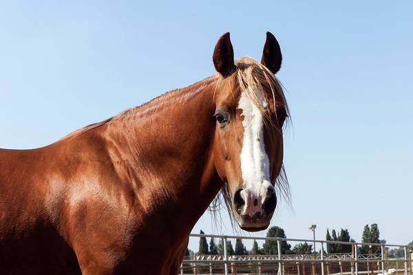Corral Photograph - Close Up Of A Horse by Photostock-israel