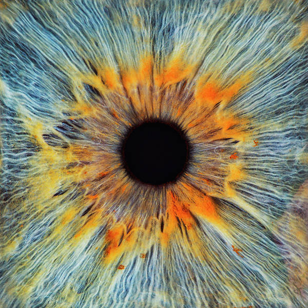 Close-up Of A Human Eye, Pupil And Iris Art Print by Dimitri Otis