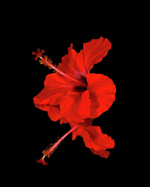 Wall Art - Photograph - Close Up Of A Red Hibiscus Flower by Scott Mead