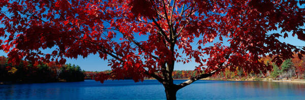 Autumn In New England Photograph - Close-up Of A Tree, Walden Pond by Panoramic Images