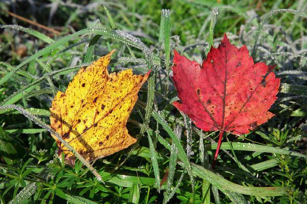 Waterbury Photograph - Close Up Of Autumn Coloured Leaves by Jenna Szerlag