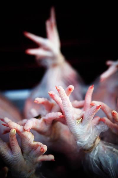 Chicken Feet Photograph - Close Up Of Bare Chicken Feet by Ron Koeberer