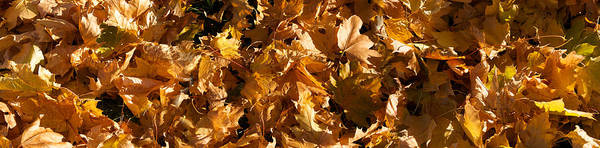 Wall Art - Photograph - Close-up Of Dry Leaves by Panoramic Images