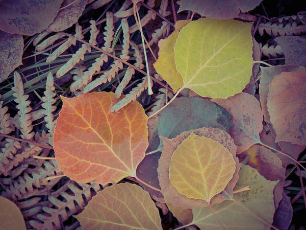 Steamboat Springs Photograph - Close-up Of Fall Foliage, Colorado by Karen Desjardin
