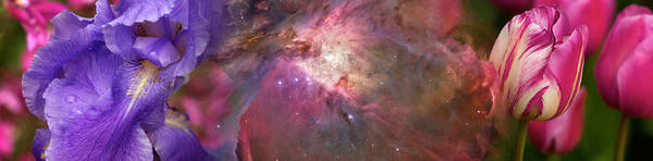 Concern Photograph - Close-up Of Galaxy With Iris And Tulips by Panoramic Images