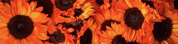 Wall Art - Photograph - Close-up Of Orange Sunflowers by Panoramic Images