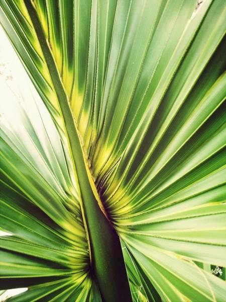 Close-up Of Palm Leaf Art Print by Marianne Wurtele / Eyeem