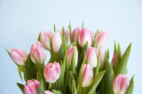 Vase Of Flowers Photograph - Close Up Of Pink Tulips by Jamieb
