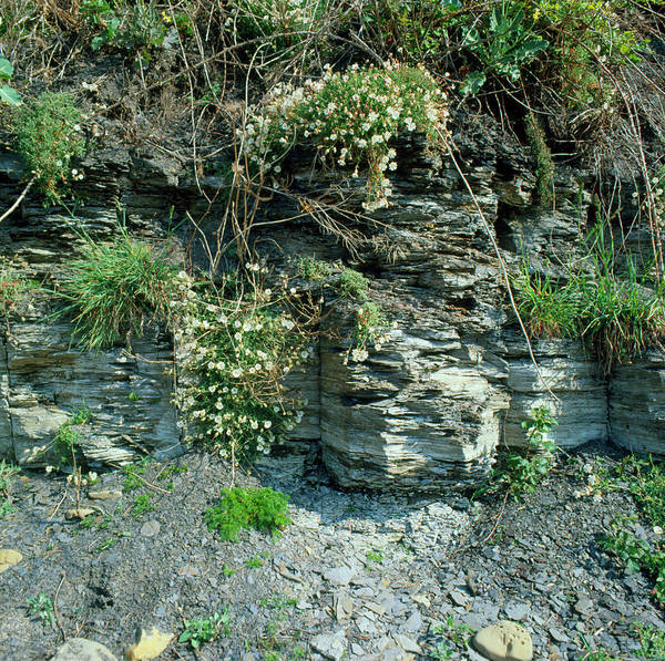 Geomorphology Wall Art - Photograph - Close-up Of Shale Strata by Dr Jeremy Burgess/science Photo Library